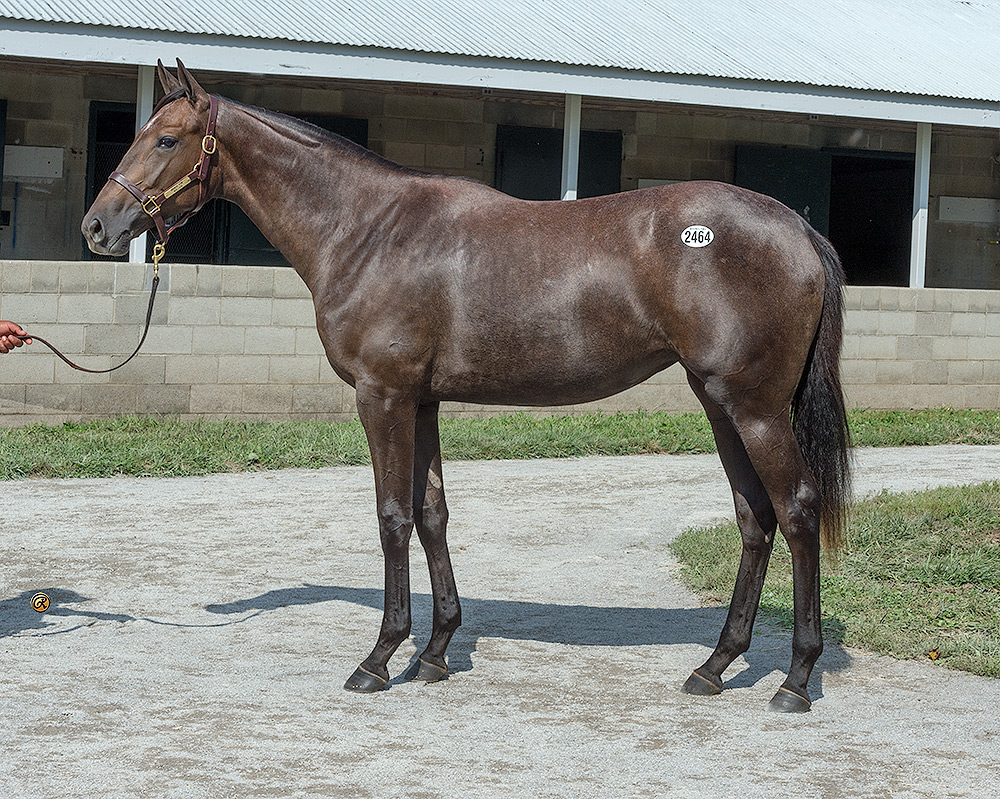 Broken Vow Filly West Point Thoroughbredswest Point