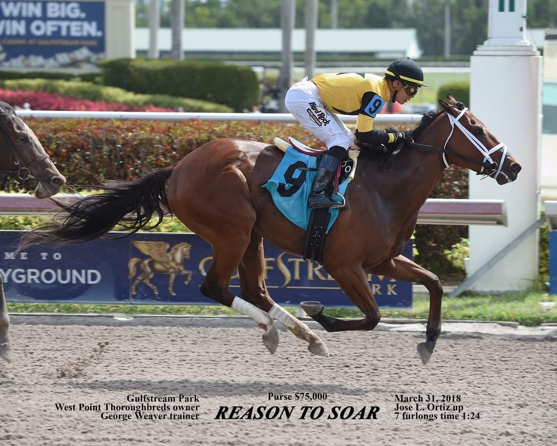 Reason to Soar | West Point ThoroughbredsWest Point